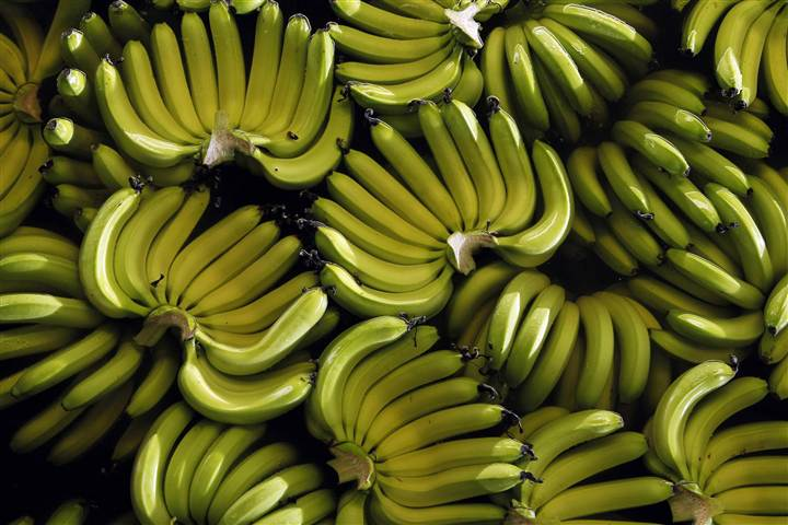 Fungus Threatens Banana Supply 3