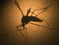 World Health Organization: Zika Virus A Public Health Emergency