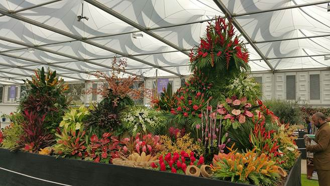 Grenada Wins Gold at RHS Chelsea Flower Show 5