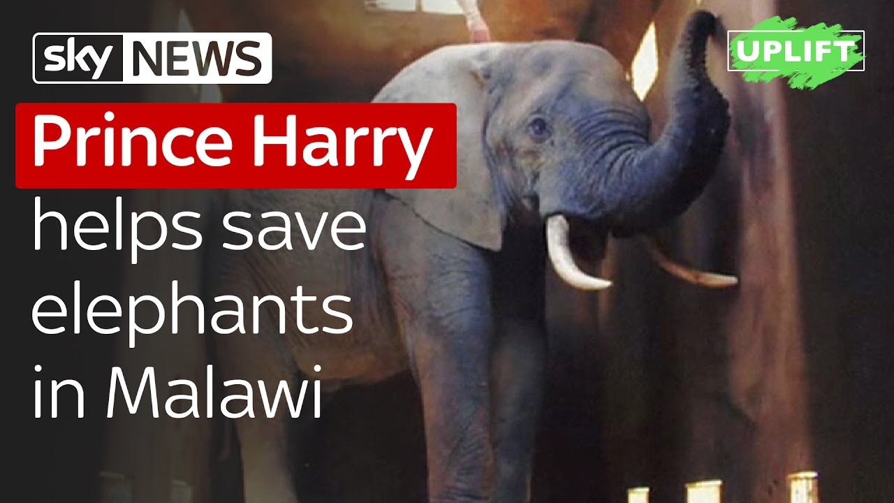 Prince Harry helps save elephants in Malawi 7