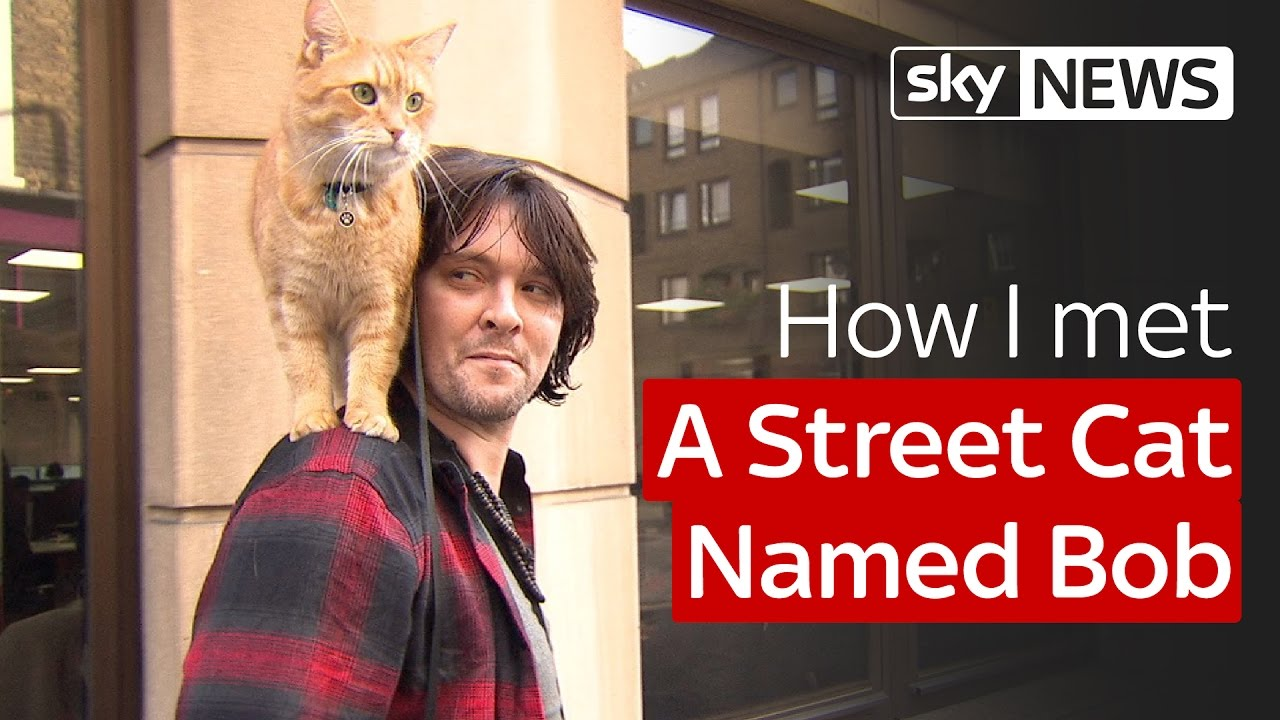 How I met A Street Cat Named Bob 8
