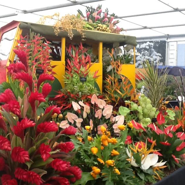 Grenada Wins 14th GOLD MEDAL at RHS Chelsea Flower Show 4