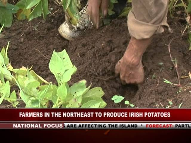 GIS Dominica Special Report, Farmers of the North-east Learn Potato Cultivation 8