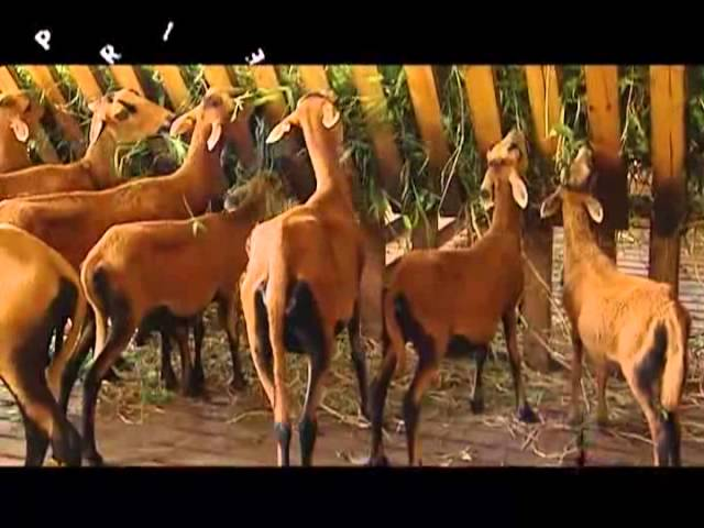 Profile: Livestock 4