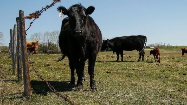 China announces it is suspending Canadian meat imports 1