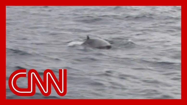 Japan resumes commercial whaling amid backlash 1