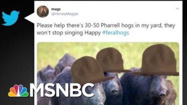 Feral Hogs Are A Real Thing | All In | MSNBC 5