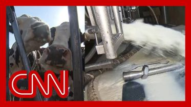 Why a farmer is dumping 12,000 gallons of milk a day 1