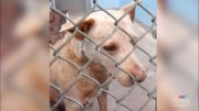 Supreme Court of Canada to decide the fate of a dog on death row 3