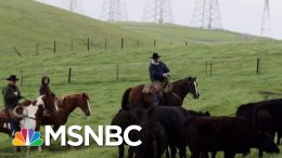 Farmers: Trump's Trade War Leaves Industry 'Worse, Not Better' | The Beat With Ari Melber | MSNBC 6