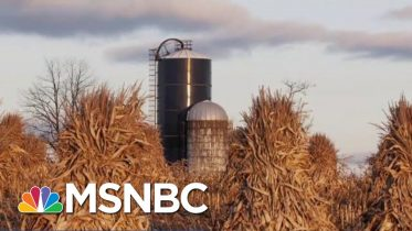 New Ethanol Rules Are Testing Farmers' Support Of President Donald Trump | Velshi & Ruhle | MSNBC 6