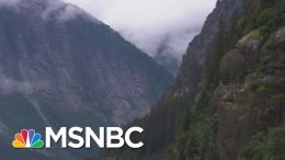Trump Aims To Open Vital U.S. Forest To Logging, Drilling, Mining | Rachel Maddow | MSNBC 8