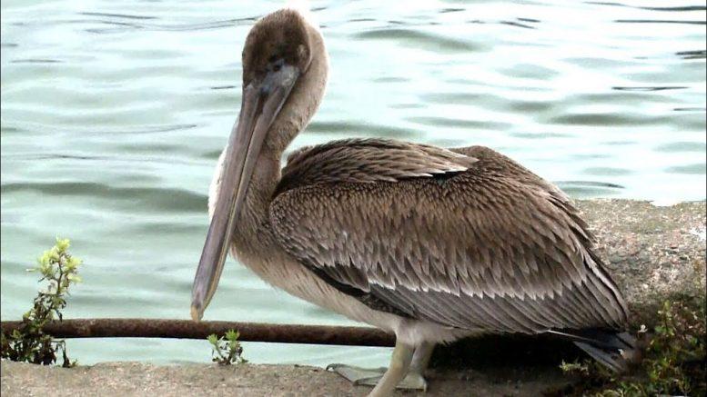Dorian blows rare birds off course and into the Maritimes 1