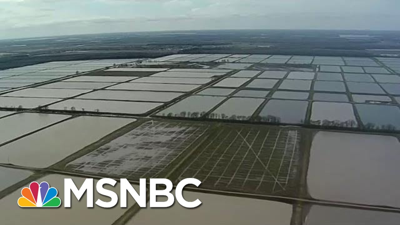 Historic Midwest Floods Expose Fragile Ecosystem | All In | MSNBC 1