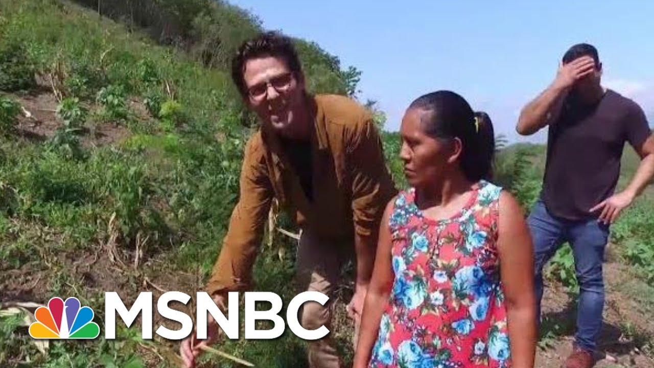 Trump Admin. Ignored Own Report On Climate Impact On Guatemalan Migration   All In   MSNBC 1