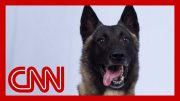 See dog who helped chase down world's top terrorist 3