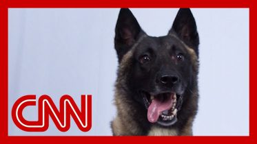 See dog who helped chase down world's top terrorist 6