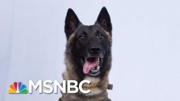In This Political Climate, We Can Still Agree That The Dog Is Awesome, Right? | Deadline | MSNBC 9
