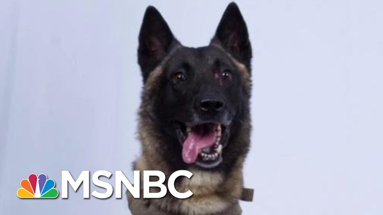 President Donald Trump And The Very Good K-9...Or Dog, As He Calls It   All In   MSNBC 1