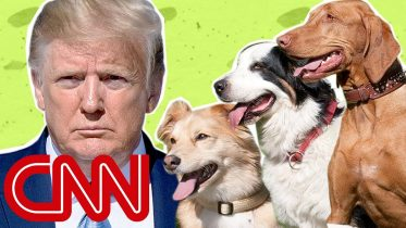 Why the Trump White House is puppy-less 5