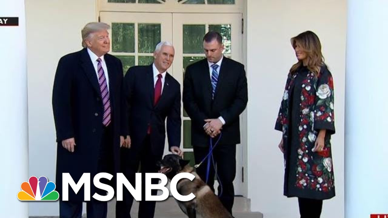 White House: Conan Is A Good...Dog? | All In | MSNBC 10
