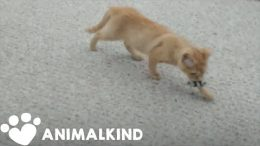 Animal investigator falls in love with kitten he rescued | Animalkind 8
