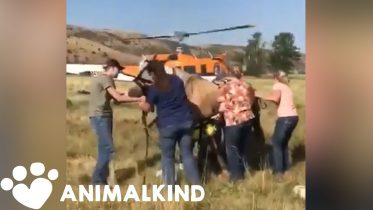 Horse dangles from helicopter during daring rescue | Animalkind 6