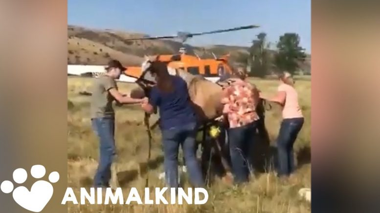Horse dangles from helicopter during daring rescue | Animalkind 1