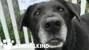 Neglected senior dogs get second chance for a happy home | Animalkind 3