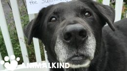 Neglected senior dogs get second chance for a happy home   Animalkind 7