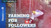 One Chinese farmer show's influencers how it should be done 2