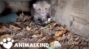 Single fox rescue turns into a whole litter rescue | Animalkind 3