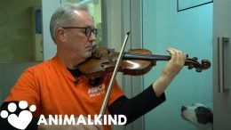 Broadway violinist performs for abused animals | Animalkind 7