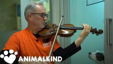Broadway violinist performs for abused animals | Animalkind 6