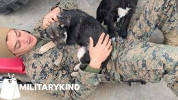 Marines work together to save two puppies | Militarykind 3