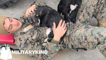 Marines work together to save two puppies | Militarykind 6