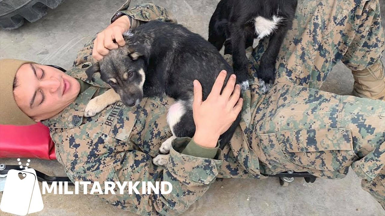 Marines work together to save two puppies | Militarykind 2