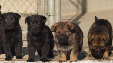 What's in a name? RCMP seeking help from Canadian kids naming 13 police pups 6