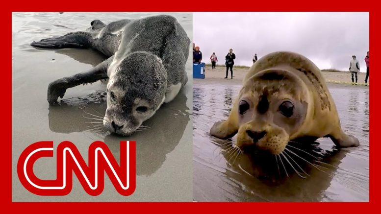 She found seal in trouble. Watch their emotional goodbye. 1