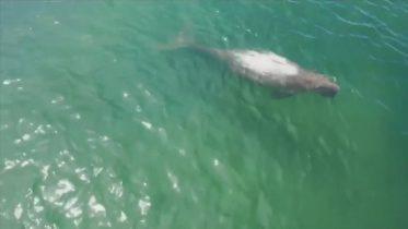 Rare sea mammals back in undisturbed Thai waters 6