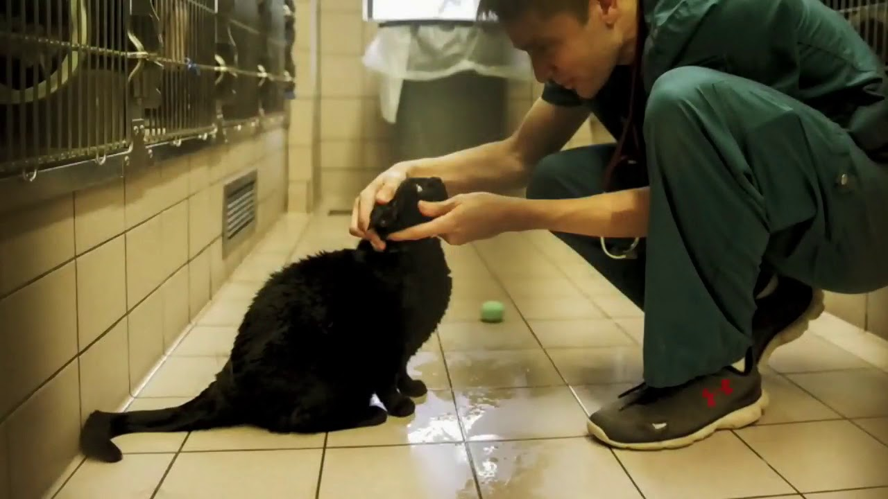 Two house cats in N.Y. test positive for COVID-19 2