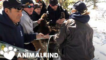 Humans build bear den for orphaned cubs | Animalkind 6