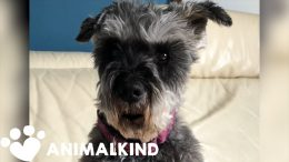 """Talking"" dog dishes out social distancing advice 