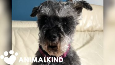 """""""Talking"""" dog dishes out social distancing advice 