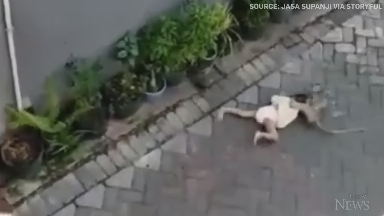 Caught on camera: Bike-riding monkey grabs toddler in Indonesia 6