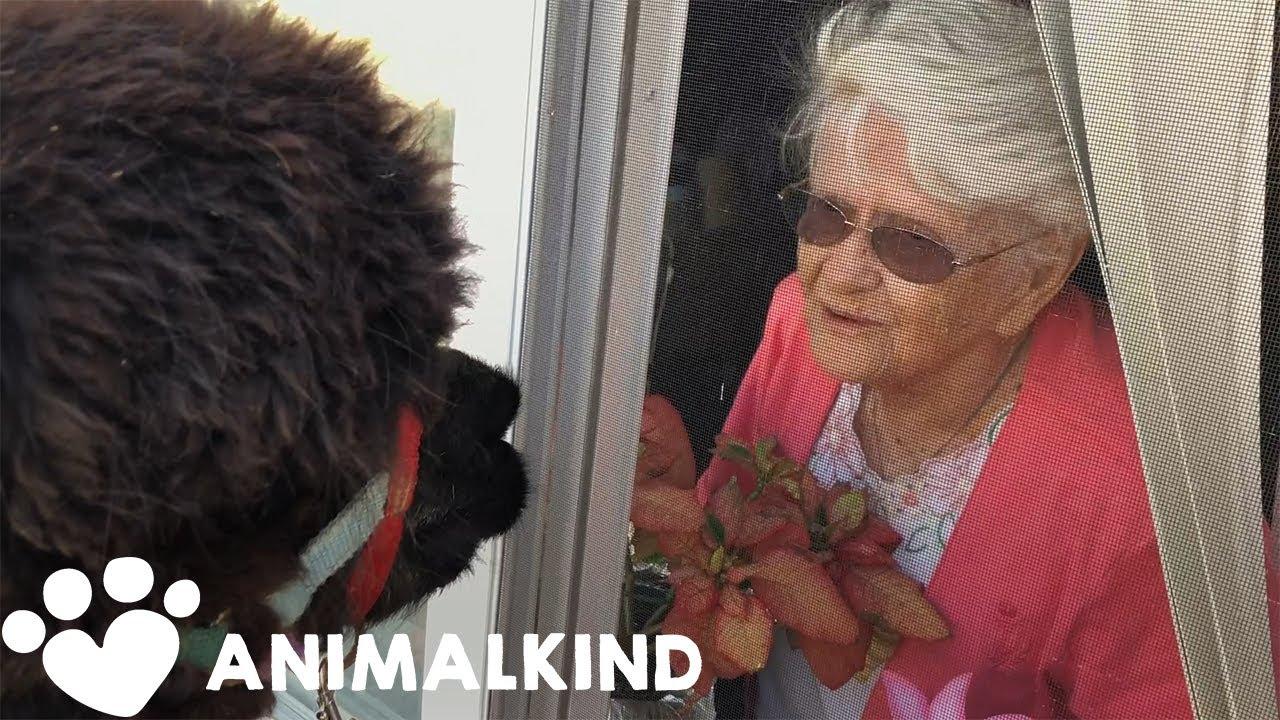 Good news: Alpacas have saved the day | Animalkind 8