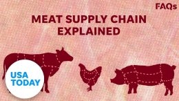 How COVID-19 affects US livestock supply chain | USA TODAY 1
