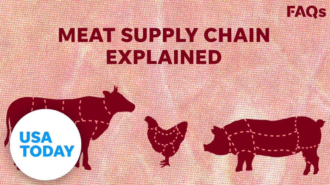 How COVID-19 affects US livestock supply chain   USA TODAY 1