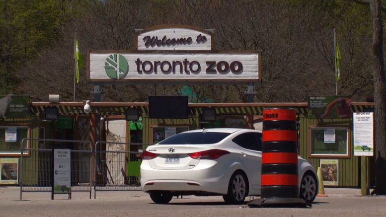 "Drive-thru ""safari"" officially opens at Toronto Zoo 1"