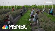 The Real Reason Grocery Shelves Are Empty | All In | MSNBC 3